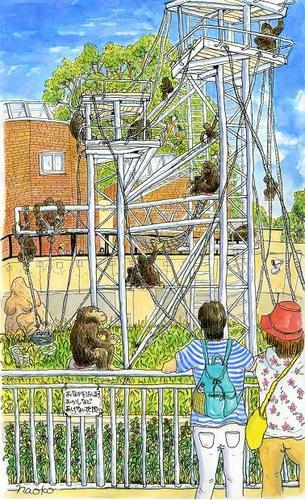 チンパンジー舘 (円山動物園)